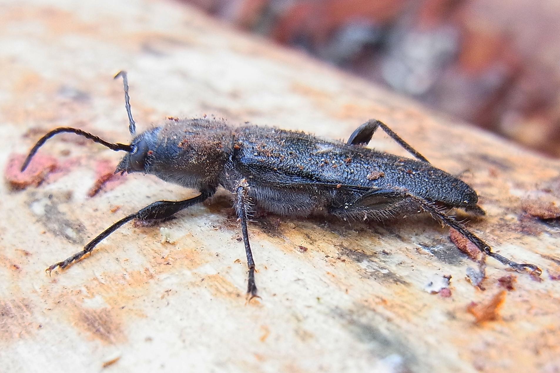 Mehlkäfer Bekämpfen käfer ungeziefer und schädlinge ungeziefer ratgeber